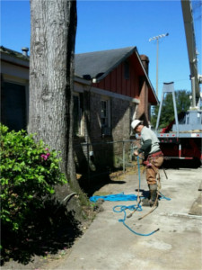 Alabama Tree Surgeons | Quality & Efficient Tree Surgeons