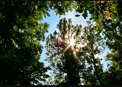 Alabama Tree Surgeons - Mobile, AL